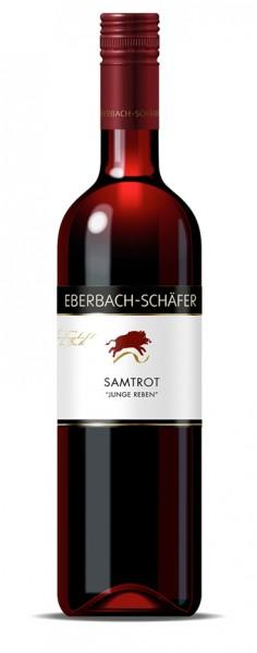 Samtrot Junge Reben - Weingut Eberbach-Schäfer - Lauffen